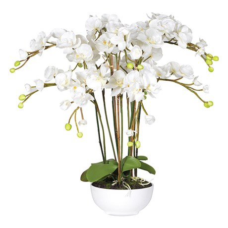 White Orchid Plants In White Ceramic Bowl
