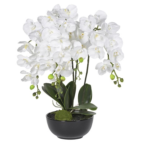 White Orchid Plants In Black Ceramic Bowl