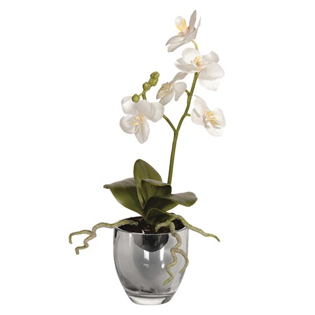 White Baby Orchid Plant In Metallic Pot