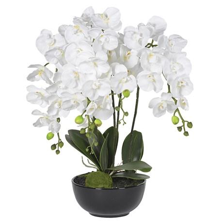White Orchid Plants In Black Ceramic Bowl